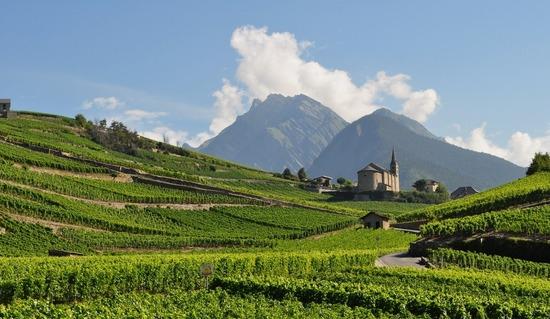 Tutored Tasting: Wines of the Rhône Valley