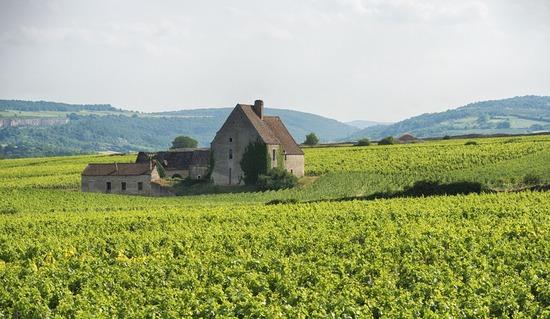 Tutored Tasting: Fine Wines of Burgundy with Wine Buyer Ben Godfrey